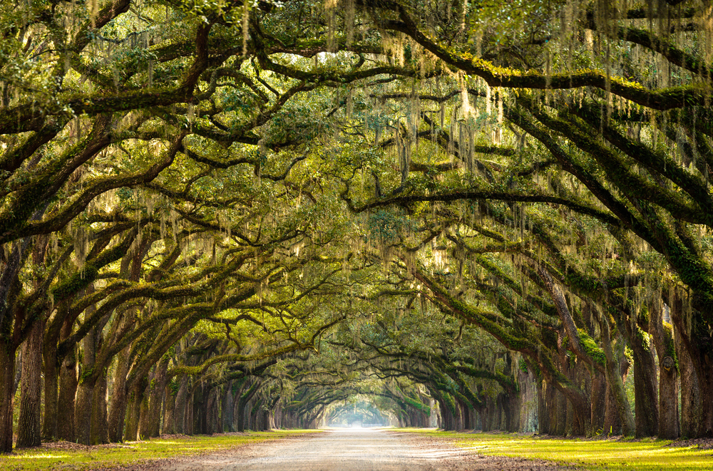 How To Experience The Spookiest Side Of Savannah Georgia