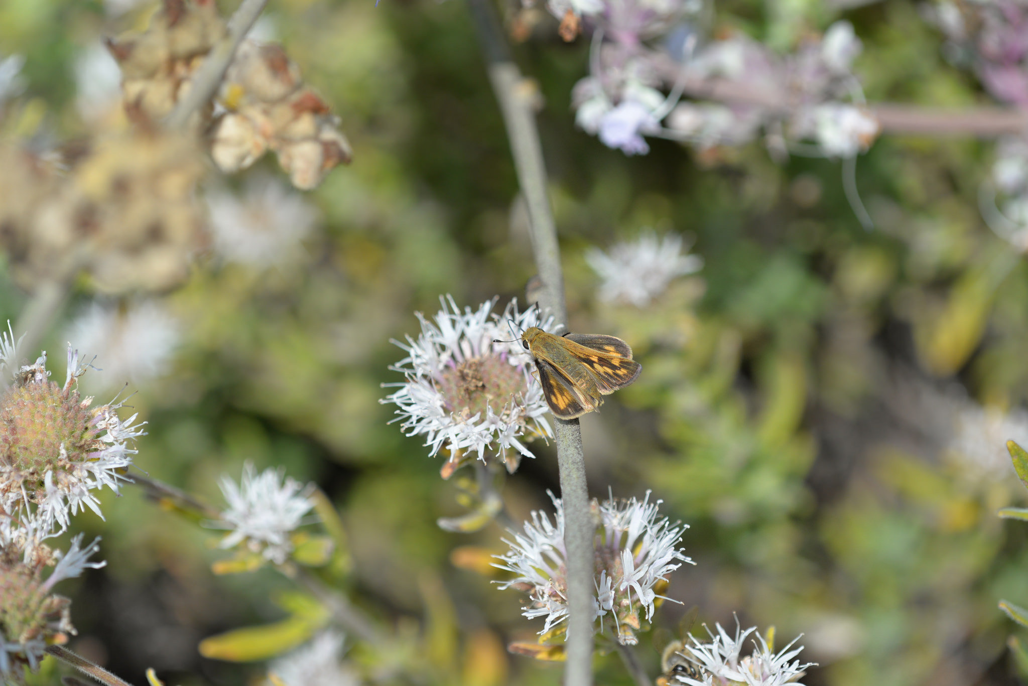 Butterfly on flower TBG 8-3-14 4 by Paul Sullivan is Licensed under CC by 2.0
