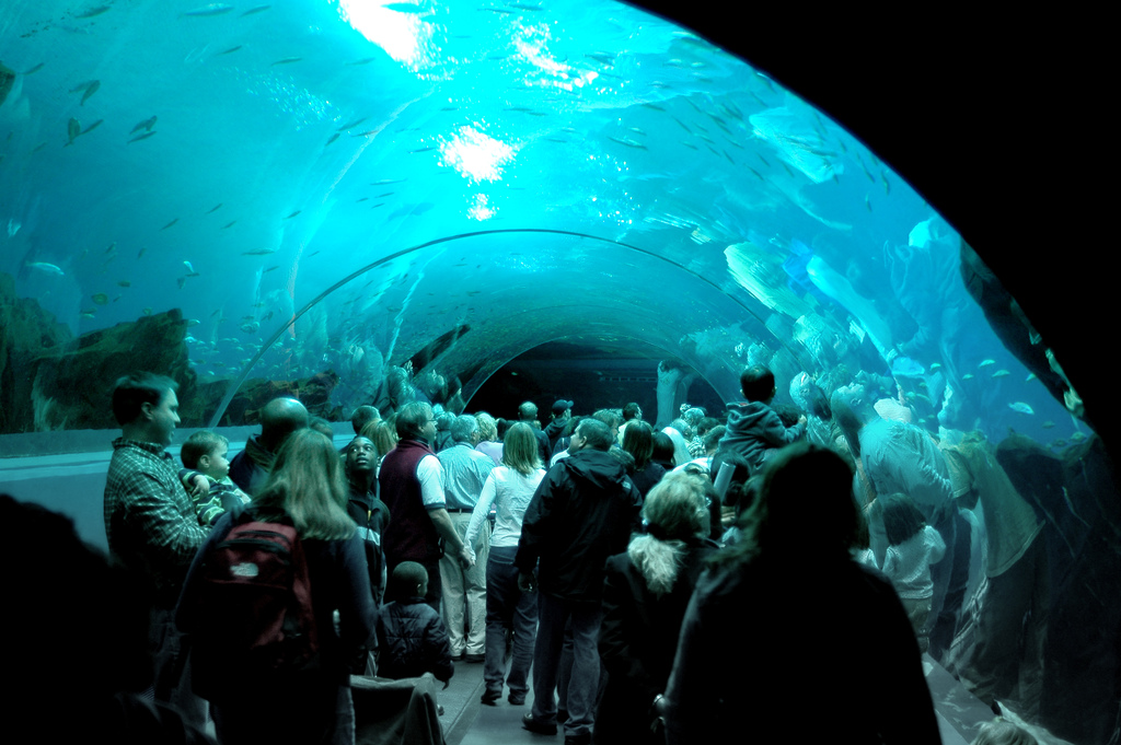"""Georgia Aquarium Glass Tunnel"" by Mike Johnston is licensed under CC 2.0."