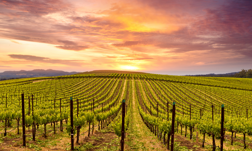 Beautiful Sunset Sky in Napa Valley Wine Country on Autumn Vineyards , Mountains.