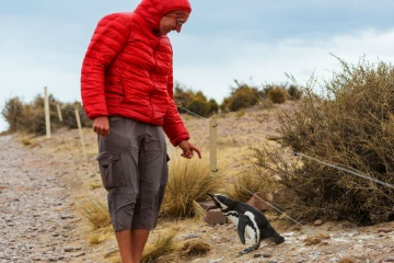 patagonia-penguins