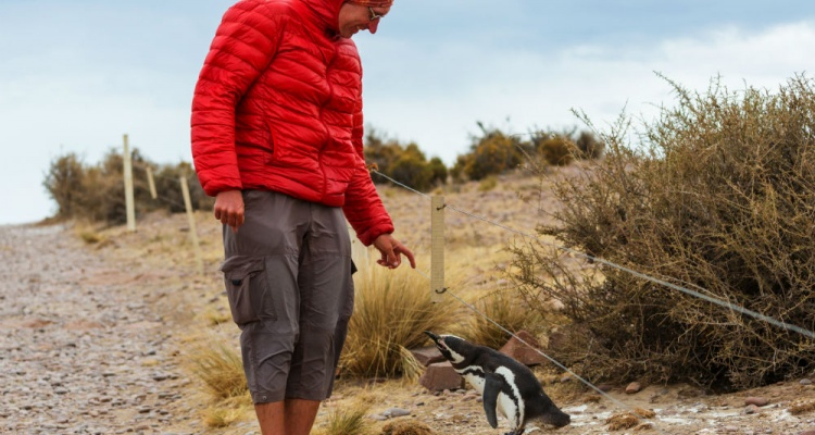 sale retailer 21f38 66e4d Why You NEED to See the Penguins of Patagonia | Miles Away ...