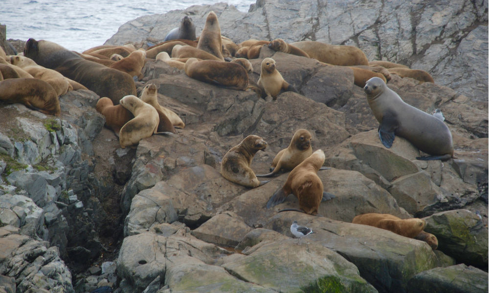 seals in the beagle channel