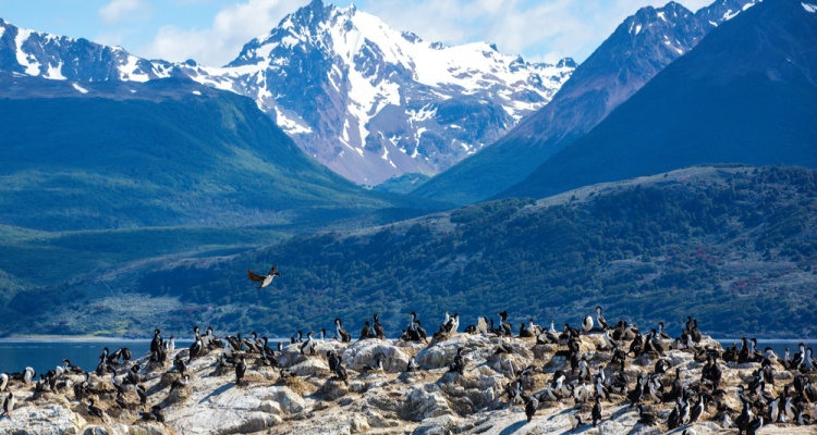 Ilha dos Passaros located on the Beagle Channel in Ushuaia, Argentina
