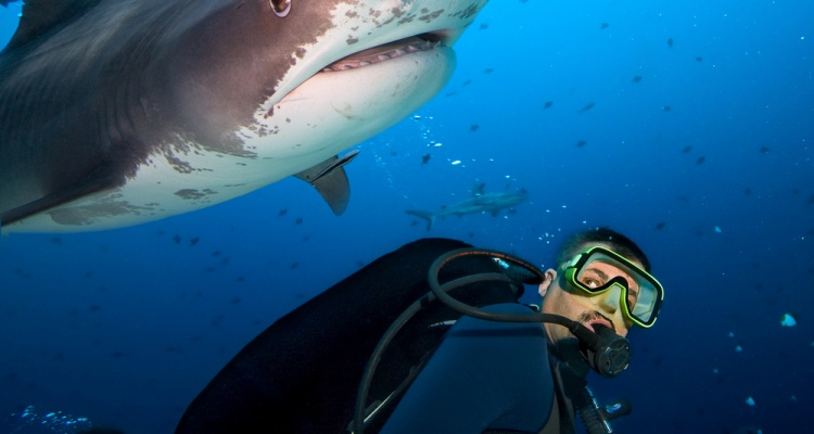 man swims with shark