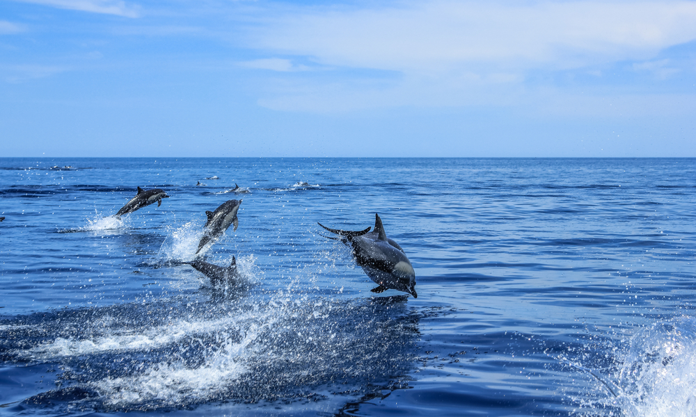 mexico dolphins