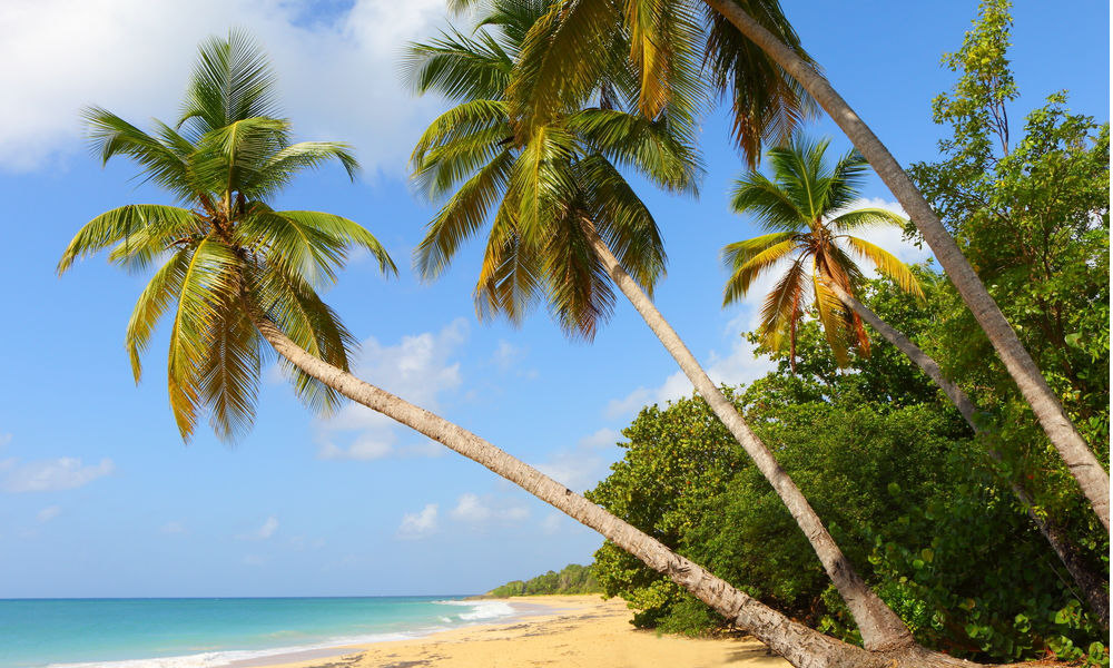 the beautiful beaches of martinique