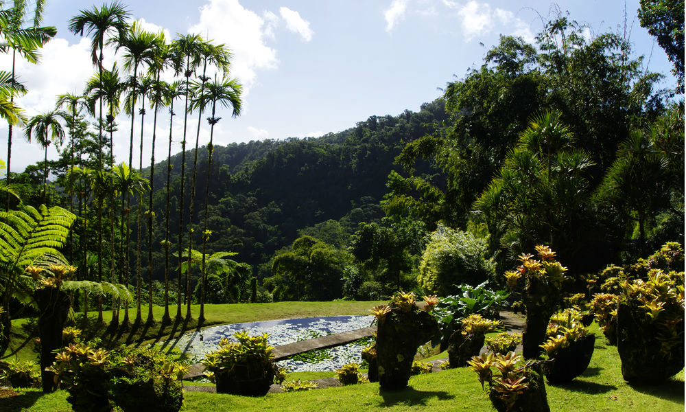 the natural scenery of martinique
