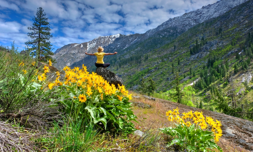 Woman meditating in nature. Arinca flowers in alpine meadows. Cascade Mountains. Oregon. The United States.