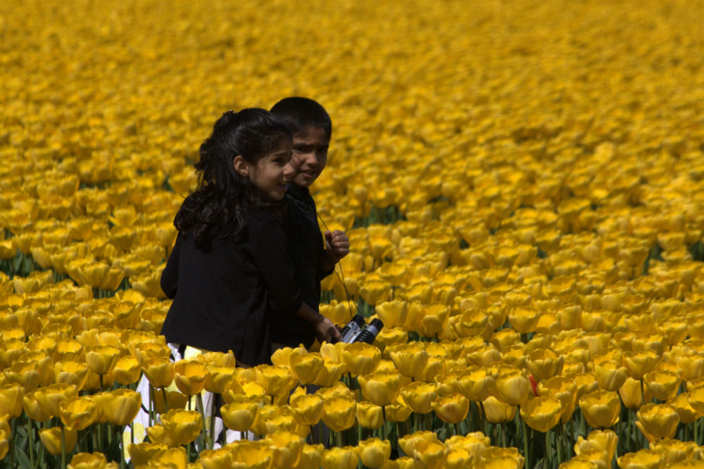 Skagit Tulip Festival: A Boy and Girl Wander Through a Tulip Field in Skagit Valley.