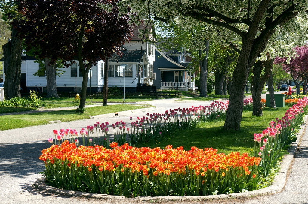 Tulip Time in Holland Michigan Tulips in Downtown Photo by Rachel Kramer