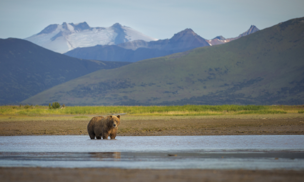National_Parks_Katmai