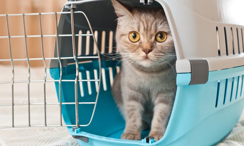 a cat in its traveling cage