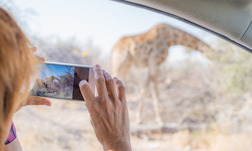 person taking picture of giraffe, Botswana