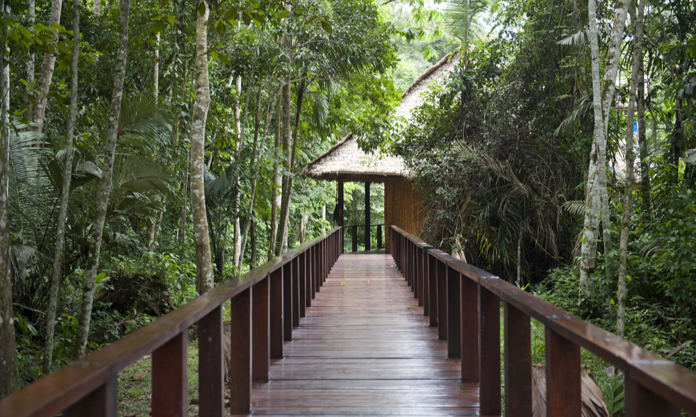 A wooden pathway at an eco lodge in the Tambopa province in Puerto Maldonado.
