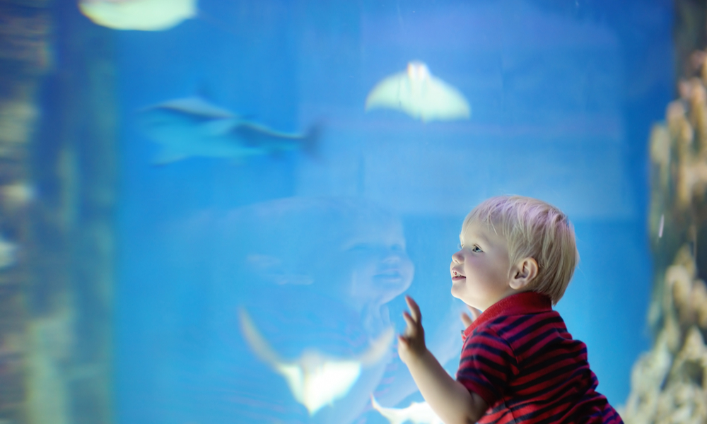 a young boy looks at fish at the Seattle Aquarium