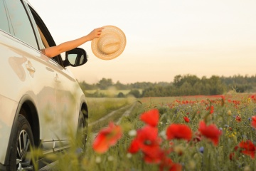 car driving through a field of flowers
