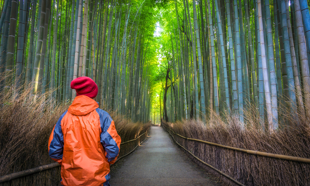 Solo Male Traveler standing from behind at the green bamboo forest in Arashiyama, Kyoto, Japan.