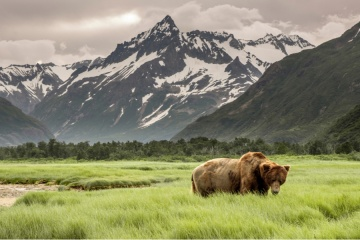 Grizzly Bear of Shores of Alaska