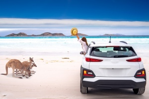 Kangaroo family at Lucky Bay beach in Cape Le Grand National Park near Esperance, Western Australia