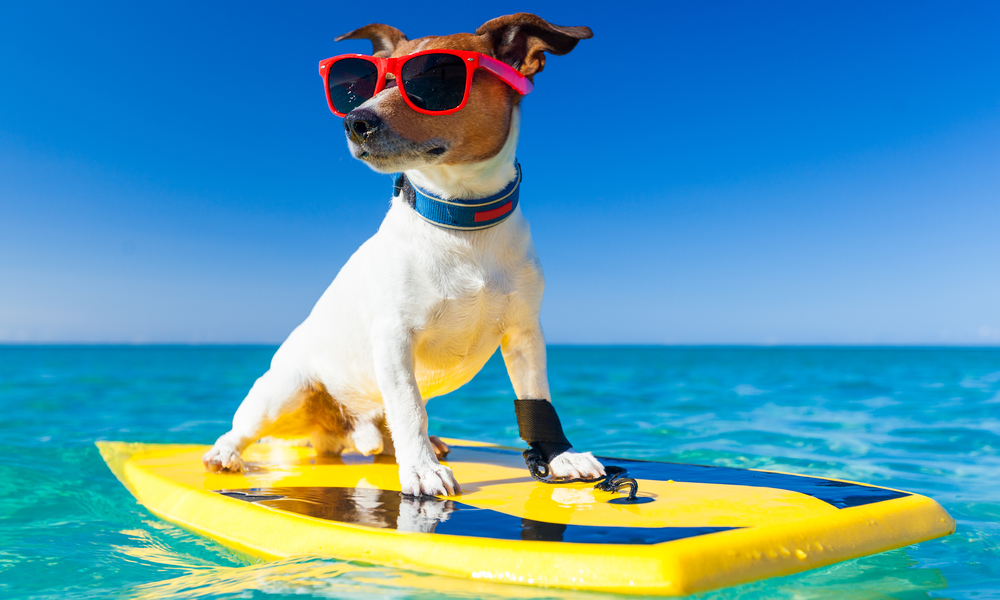 Dog On Surfboard
