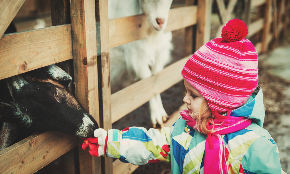 Best Free Things You Can Do in Denver with Kids: little girl feeding sheep