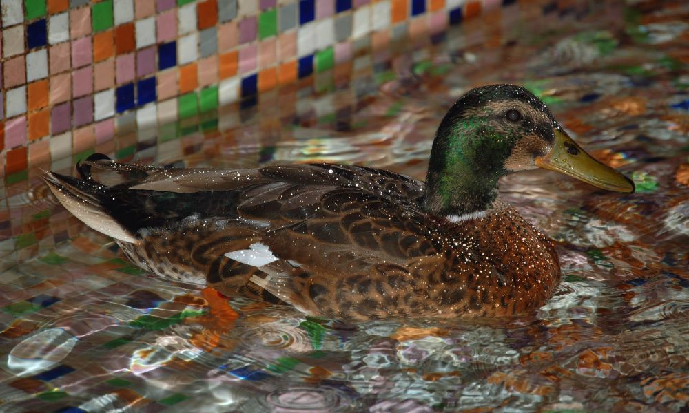 things to do in memphis with kids ducks peabody hotel