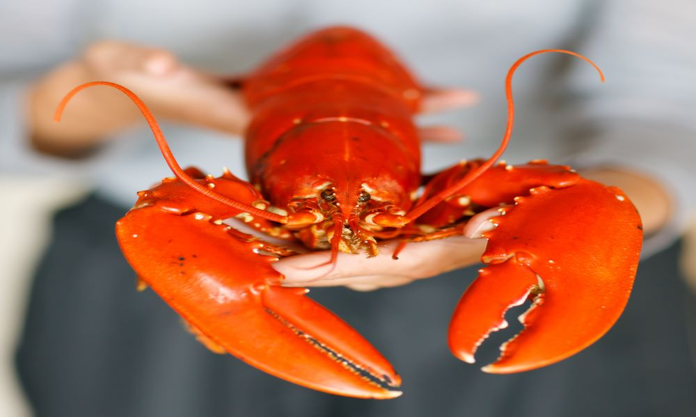 lobster - allowed to take on an airplane