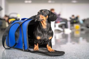 Dog in a suitcase at the airport