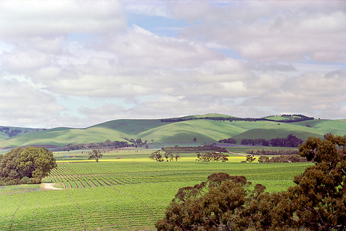 The breathtaking views of Barossa Valley, Australia