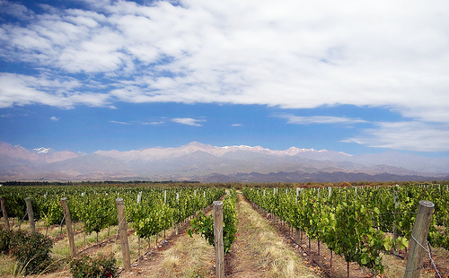 Magnificent Mendoza vineyard in Argentina