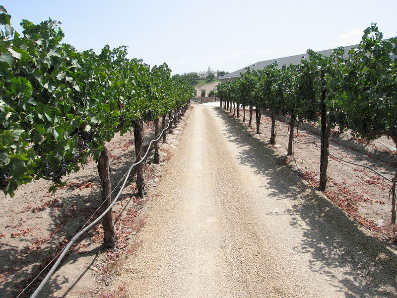Temecula, California vineyard (Image: Wikimedia Commons)