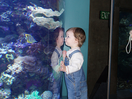 Family Travel: Aquarium of the Pacific in Long Beach, Flickr: adoreone