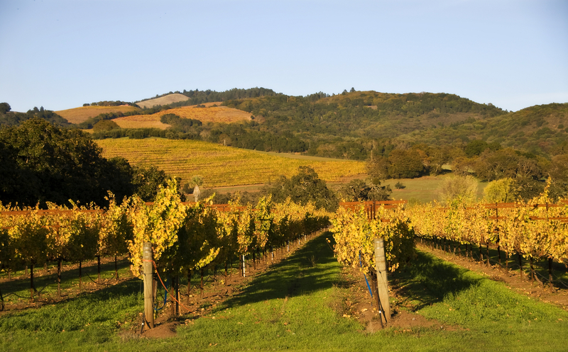 How to Savor California Wine Country