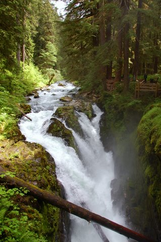 Five Fun Things for Families to do in Olympic National Park, IMG Cred: Sharlene Earnshaw
