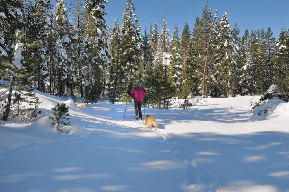Cross country skiing with dogs in the California Sierra Nevada mountains