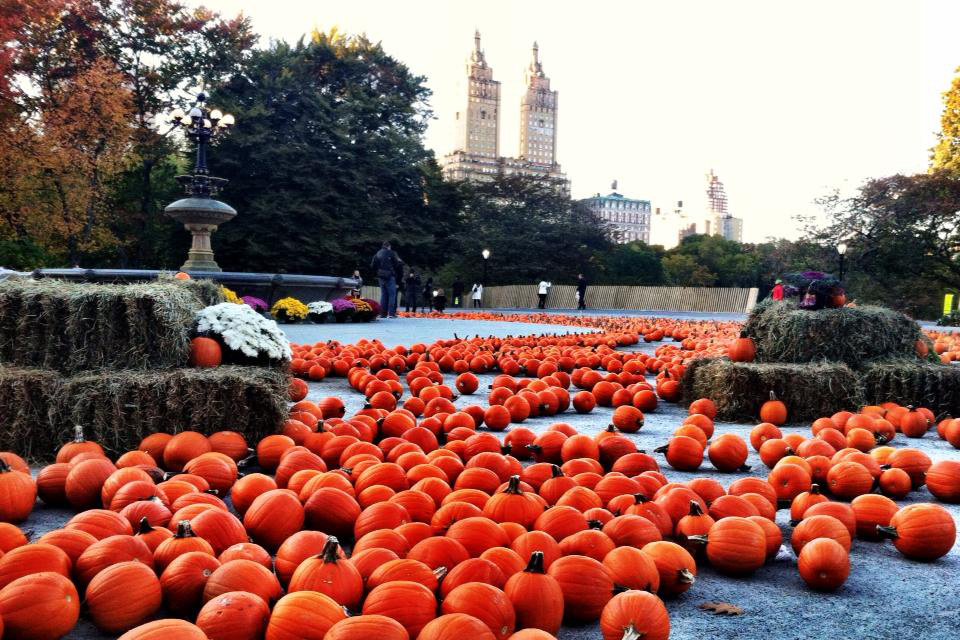 Pumpkins on Central Park's Cherry Hill