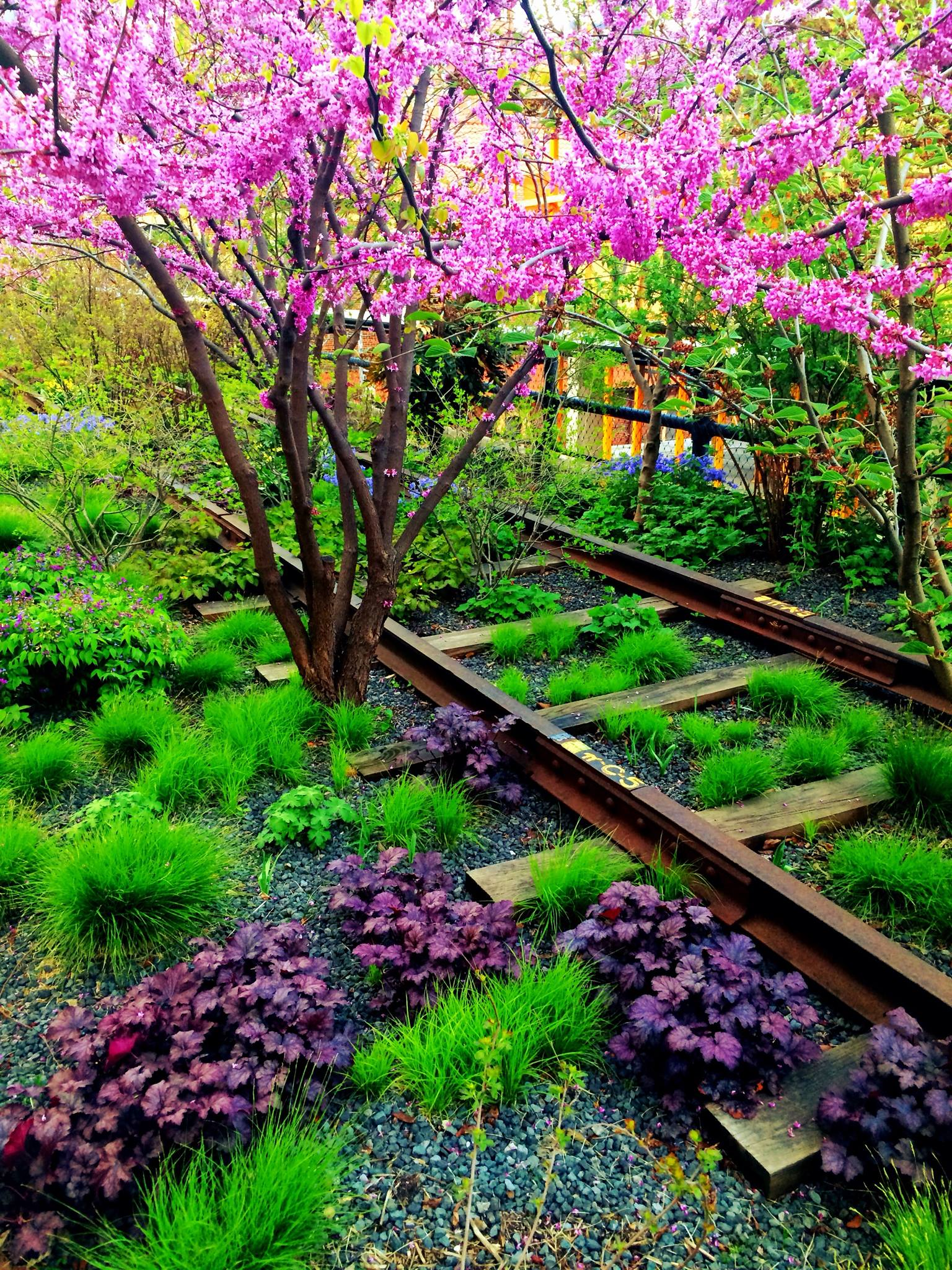 The High Line in spring