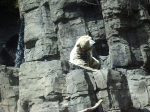 NYC: Polar Bear in Central Park Zoo