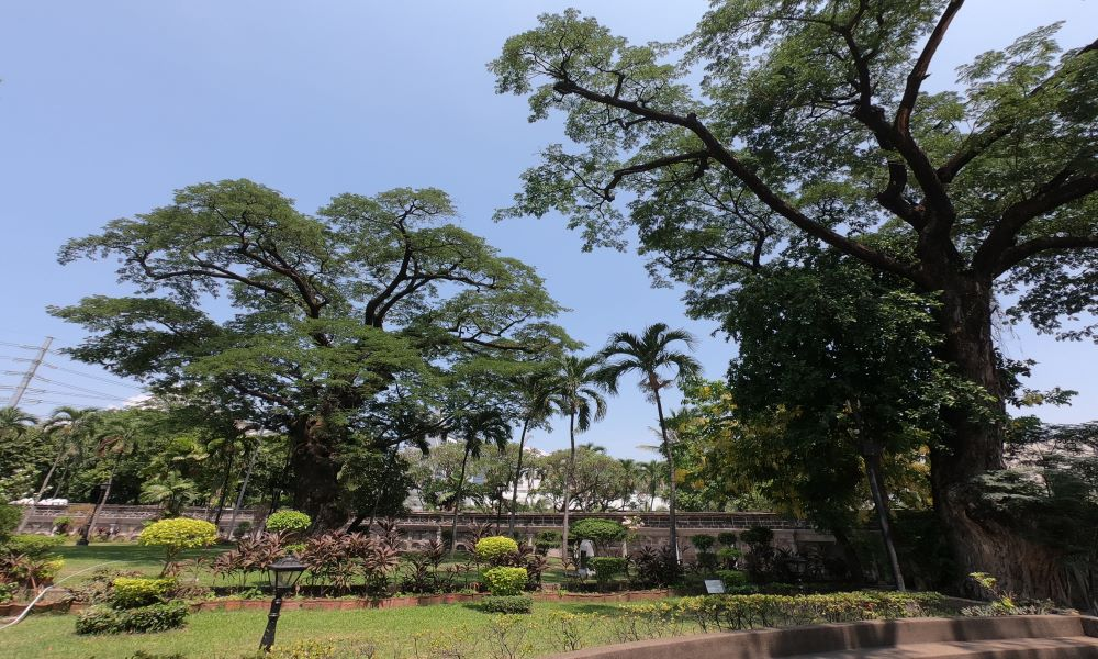 Best Places in Manila for Nature Lovers